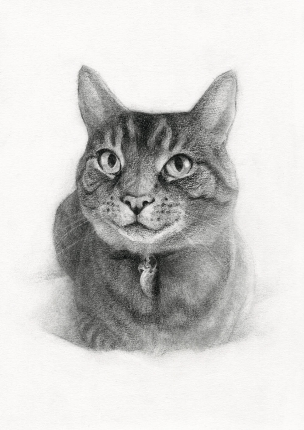 Cat Drawing in Charcoal on Paper, by Artist & Illustrator James Martin